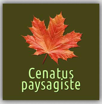 logo-Cenatus Paysagiste | Paysagiste Pont-Péan